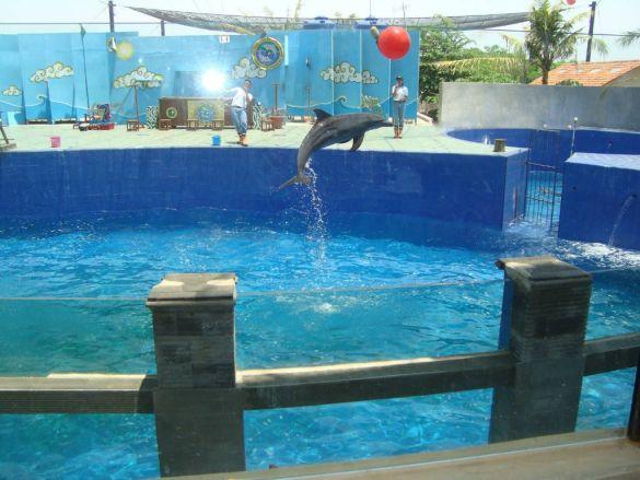 Lumba-lumba sigandu Batang Dolphin Center