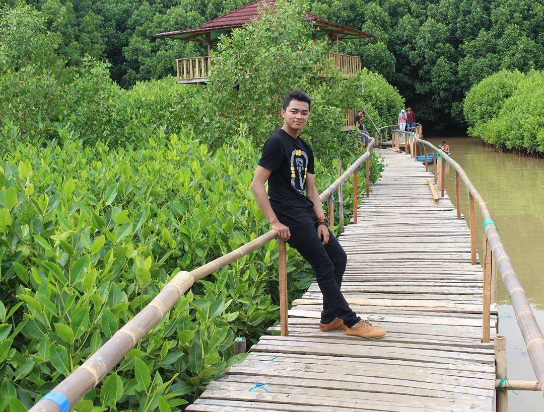 hutan mangrove pantai logending